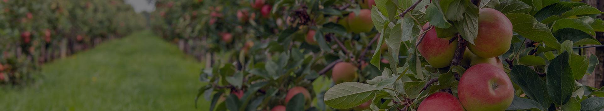 stare sorte voća